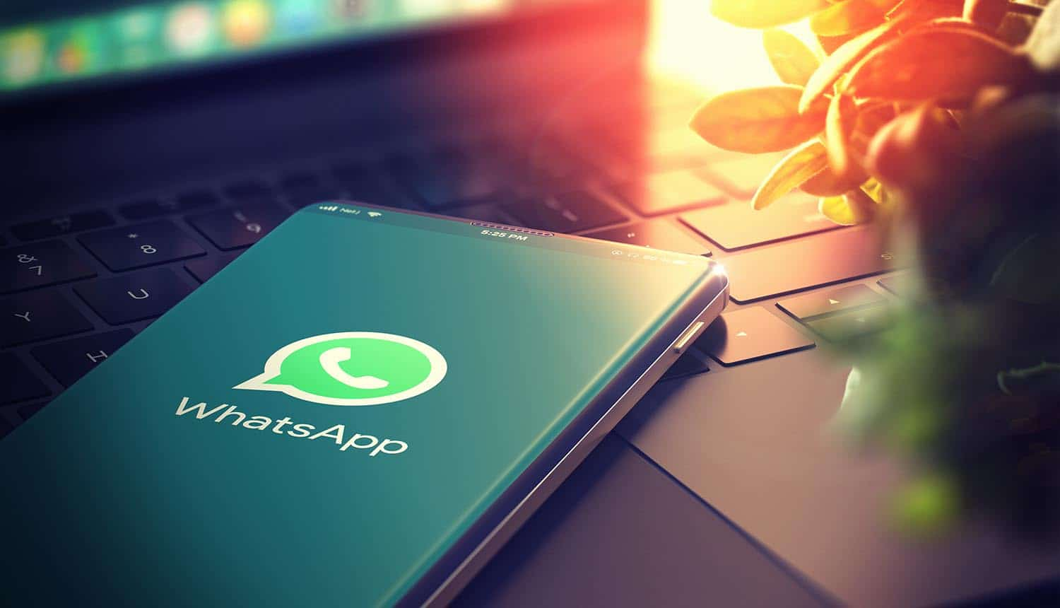 whatsapp video and voice call support